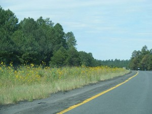 RoadAndSunflowers