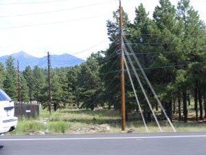 TreesAndPoles